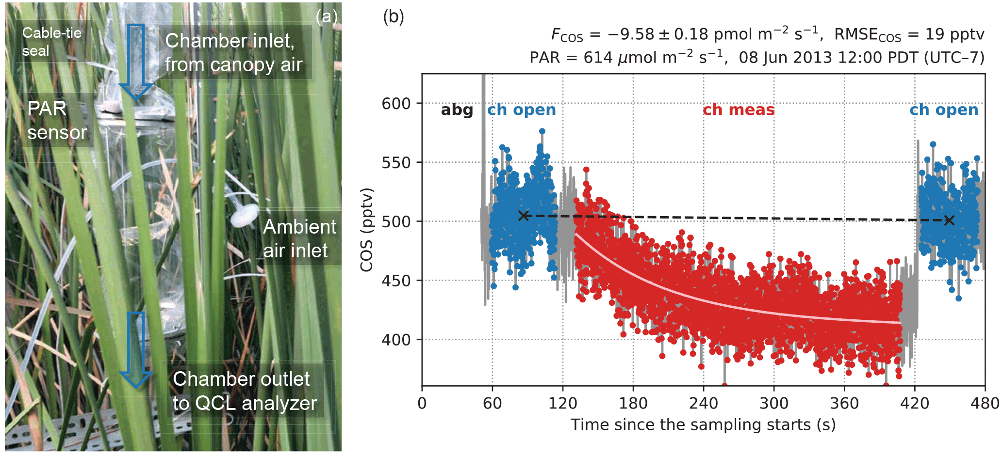 BG - Stomatal control of leaf fluxes of carbonyl sulfide and CO2 in