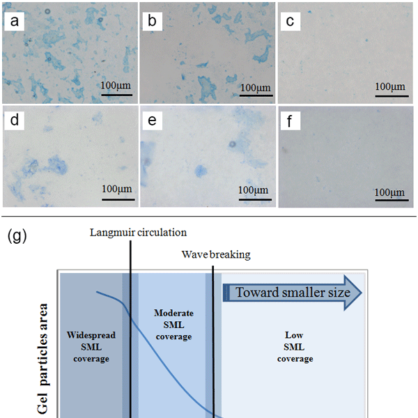 BG - Relations - Marine phytoplankton stoichiometry mediates