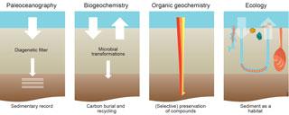 https://www.biogeosciences.net/15/413/2018/bg-15-413-2018-f01