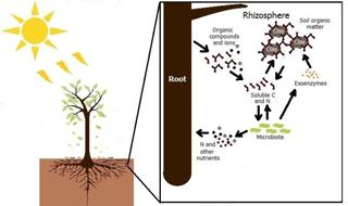 https://www.biogeosciences.net/15/4943/2018/bg-15-4943-2018-f01