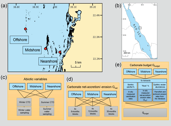 Swell Bg Coral Reef Carbonate Budgets And Ecological Drivers In The Online Wiring Library Carpartdiagramboompriceit