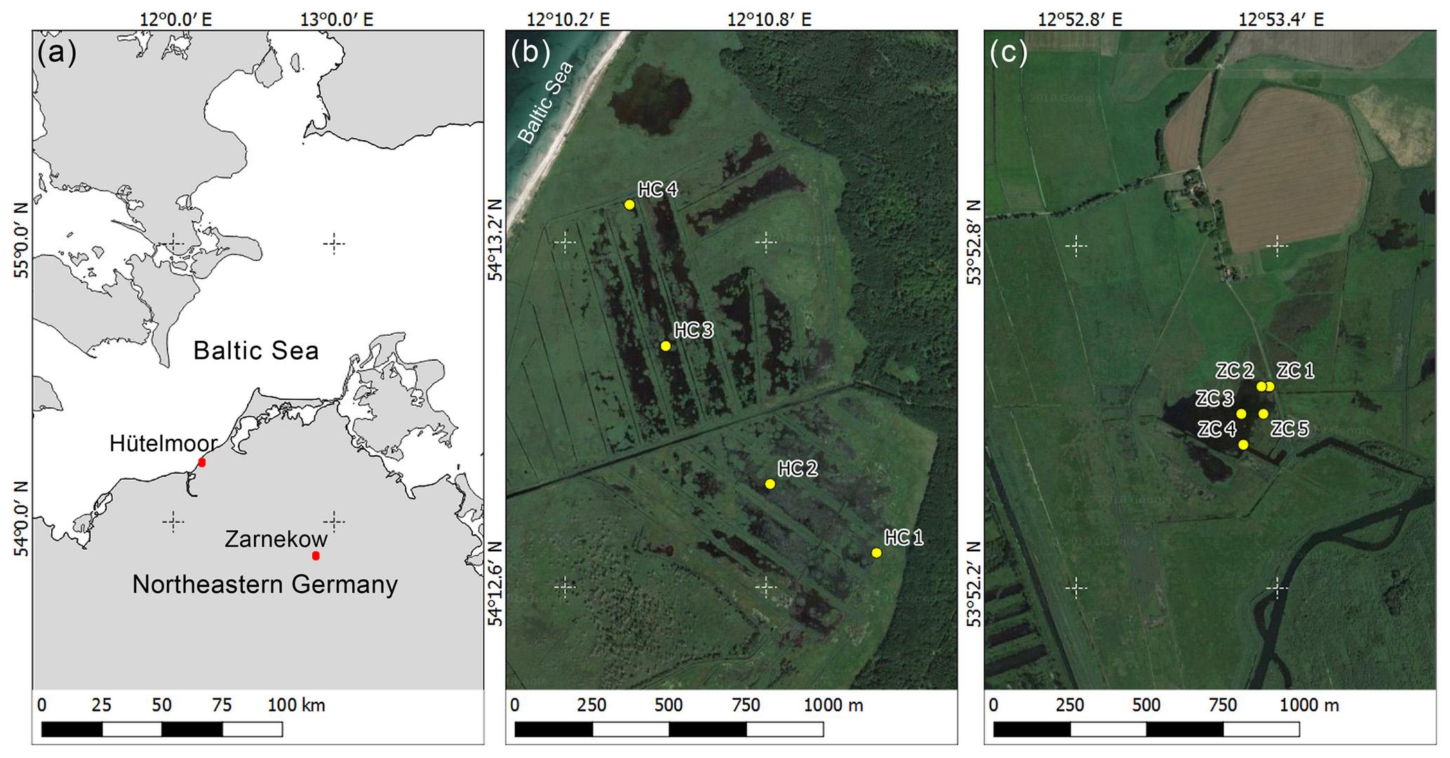 BG - Predominance of methanogens over methanotrophs in rewetted fens
