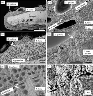 https://www.biogeosciences.net/15/781/2018/bg-15-781-2018-f02