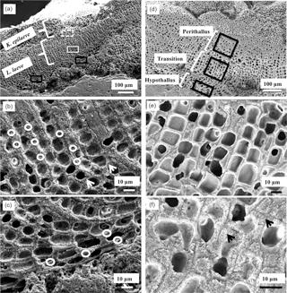 https://www.biogeosciences.net/15/781/2018/bg-15-781-2018-f03