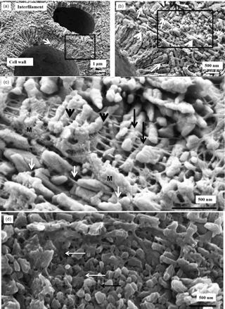 https://www.biogeosciences.net/15/781/2018/bg-15-781-2018-f07