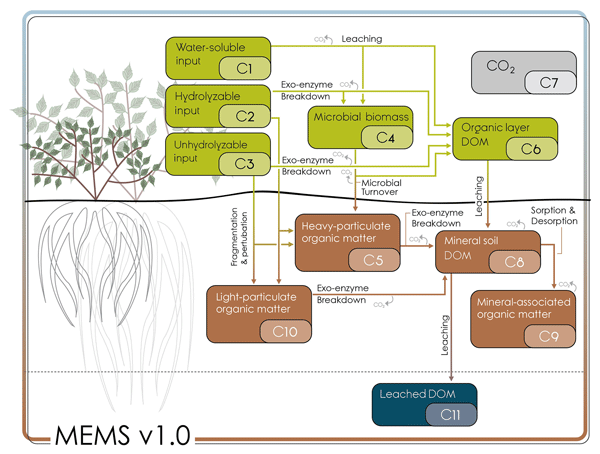 BG - Relations - An improved parameterization of leaf area