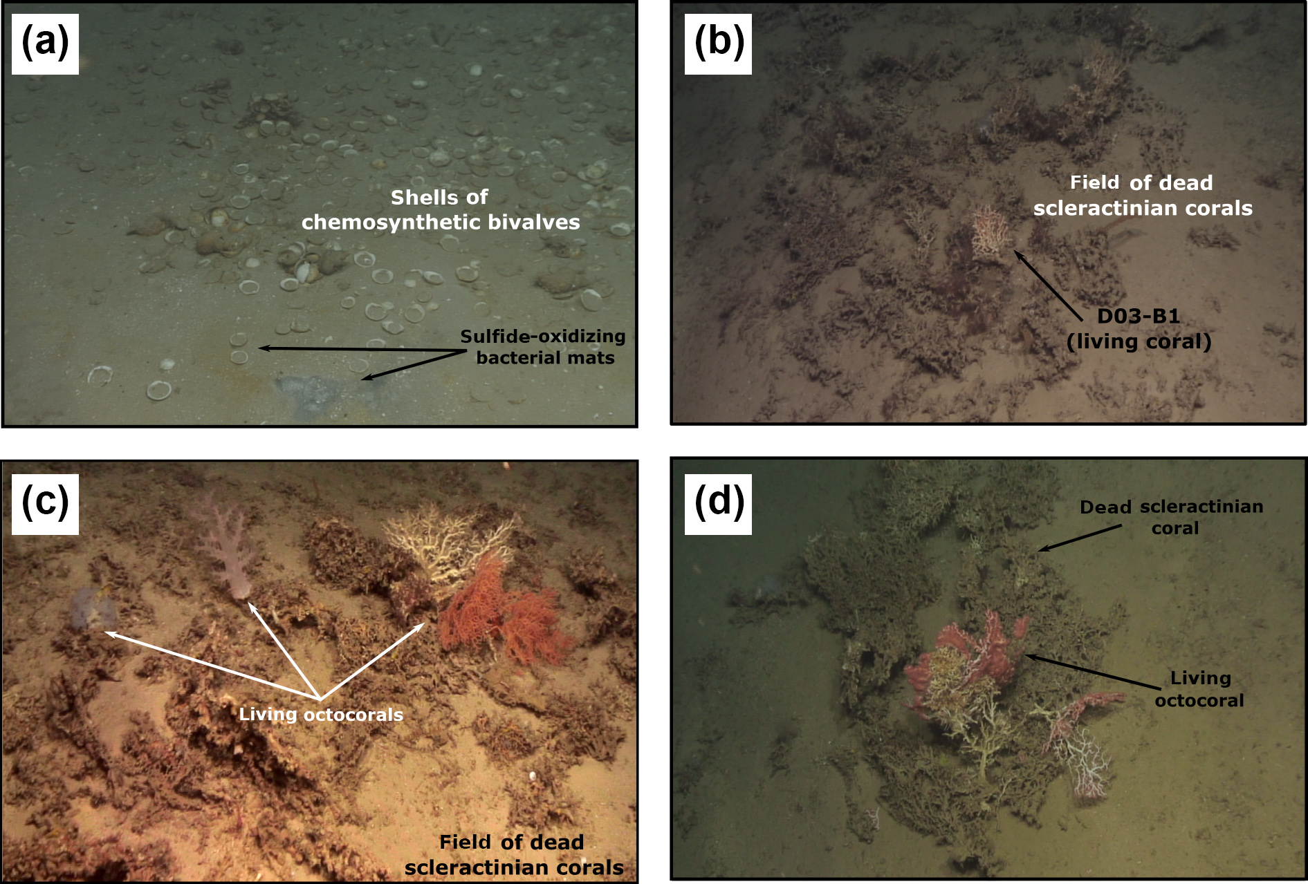 BG - Cold-water corals and hydrocarbon-rich seepage in Pompeia