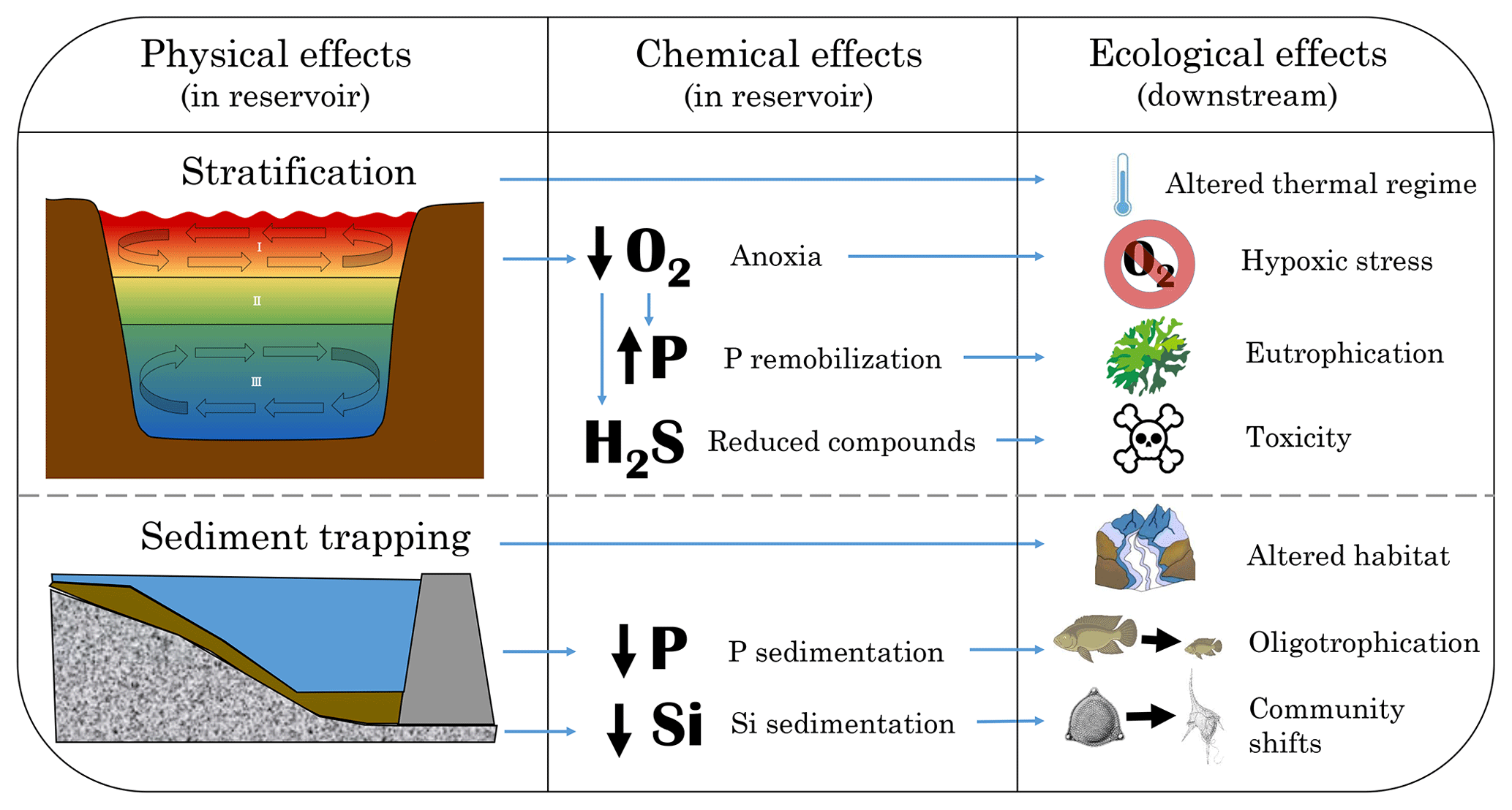 BG - Reviews and syntheses: Dams, water quality and tropical