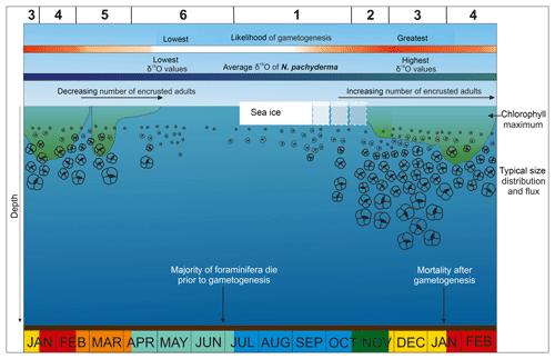 https://www.biogeosciences.net/16/3267/2019/bg-16-3267-2019-f09