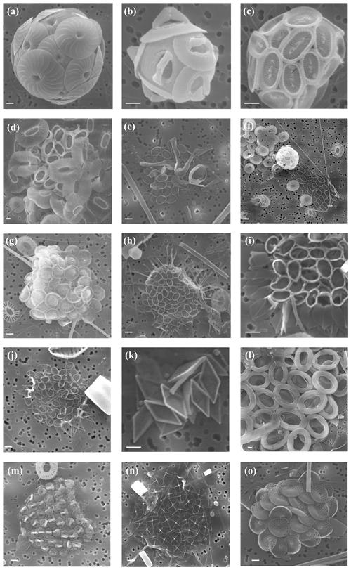 https://www.biogeosciences.net/16/3679/2019/bg-16-3679-2019-p02