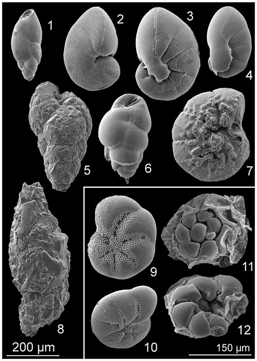 https://www.biogeosciences.net/16/3835/2019/bg-16-3835-2019-p01