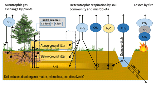 https://www.biogeosciences.net/16/4687/2019/bg-16-4687-2019-f01