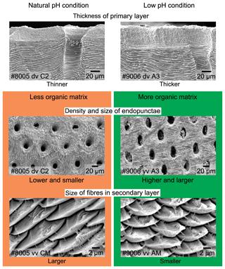 https://www.biogeosciences.net/16/617/2019/bg-16-617-2019-f11