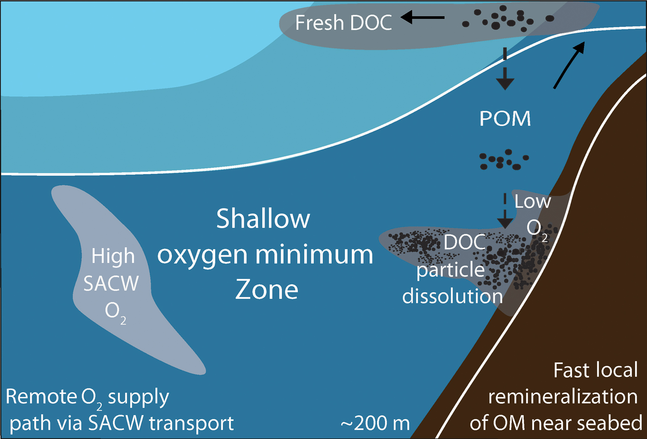 BG - Remote and local drivers of oxygen and nitrate variability in