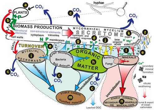 https://www.biogeosciences.net/17/1507/2020/bg-17-1507-2020-f02