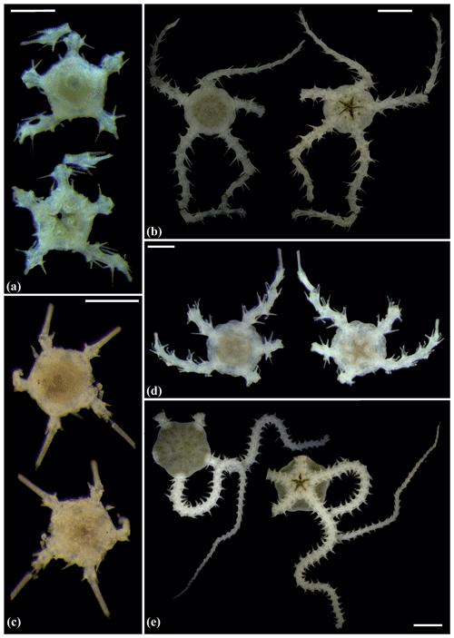 https://www.biogeosciences.net/17/1845/2020/bg-17-1845-2020-f05