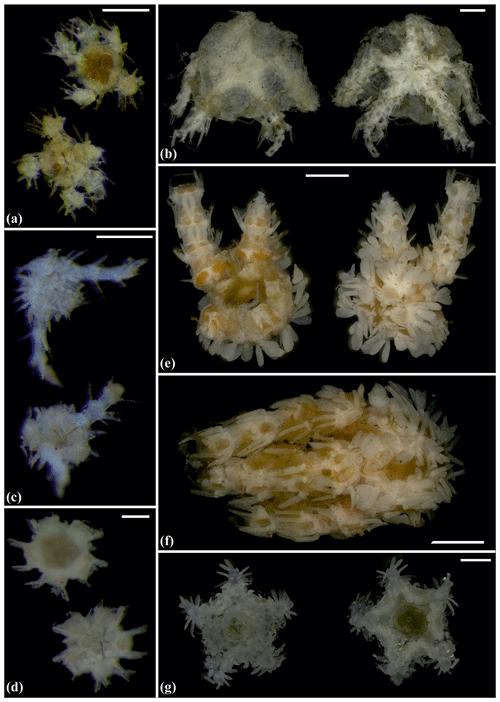 https://www.biogeosciences.net/17/1845/2020/bg-17-1845-2020-f11