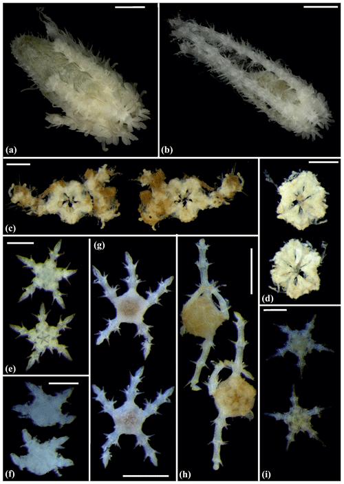 https://www.biogeosciences.net/17/1845/2020/bg-17-1845-2020-f12
