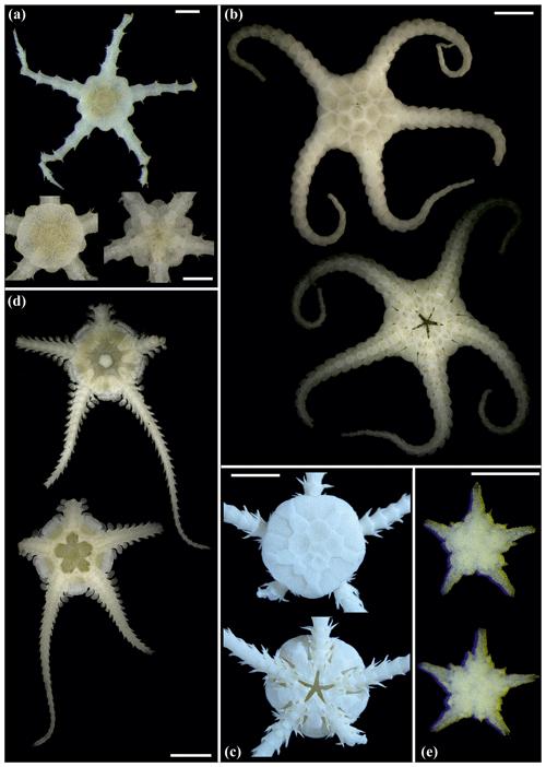 https://www.biogeosciences.net/17/1845/2020/bg-17-1845-2020-f13