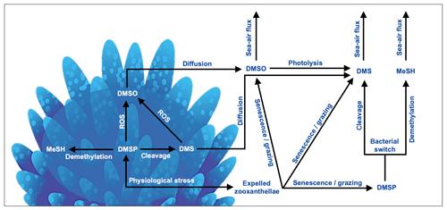 https://www.biogeosciences.net/17/2181/2020/bg-17-2181-2020-f03