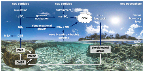 https://www.biogeosciences.net/17/2181/2020/bg-17-2181-2020-f04