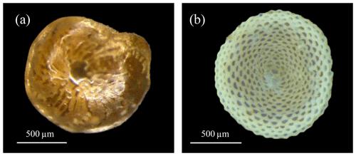 https://www.biogeosciences.net/17/2341/2020/bg-17-2341-2020-f01