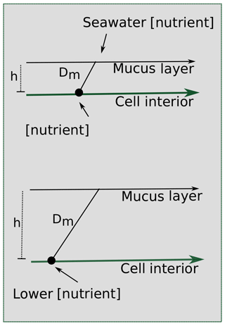 https://www.biogeosciences.net/17/2537/2020/bg-17-2537-2020-f09