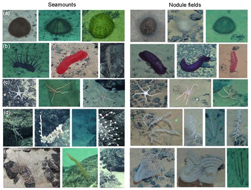 https://www.biogeosciences.net/17/2657/2020/bg-17-2657-2020-f02