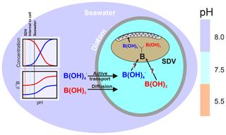 https://www.biogeosciences.net/17/2825/2020/bg-17-2825-2020-f08