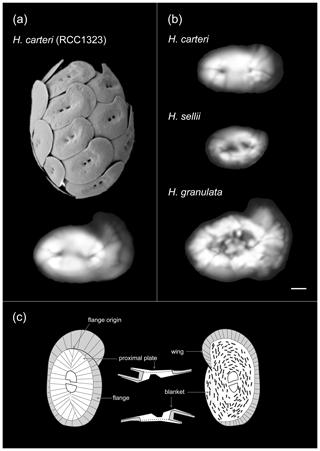 https://www.biogeosciences.net/17/2955/2020/bg-17-2955-2020-f01
