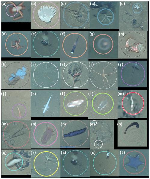 https://www.biogeosciences.net/17/3115/2020/bg-17-3115-2020-f02