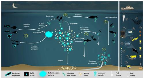 https://www.biogeosciences.net/17/3757/2020/bg-17-3757-2020-f01