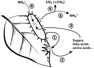 https://www.biogeosciences.net/17/499/2020/bg-17-499-2020-f01